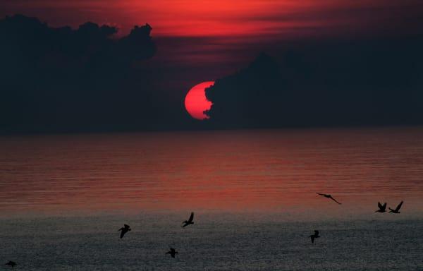 Morning Flight Photography Art | Ed Sancious - Stillness In Change