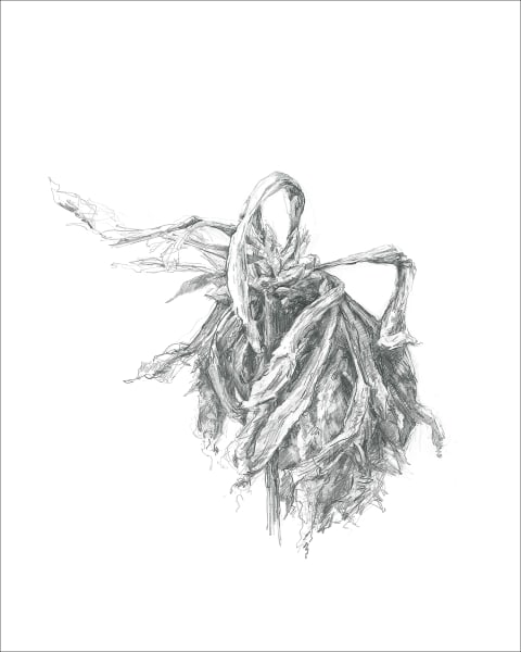 Chrysanthemum 08, a frazzled series for frazzled times. Graphite drawings by Kim Gatesman.