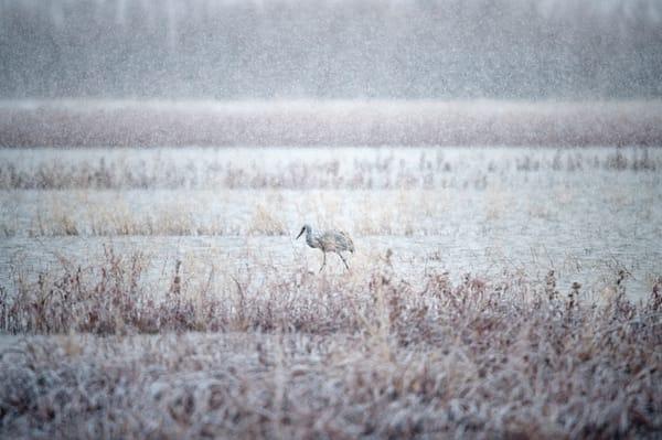 Bosque Snowfall Photography Art | Carol Brooks Parker Fine Art Photography