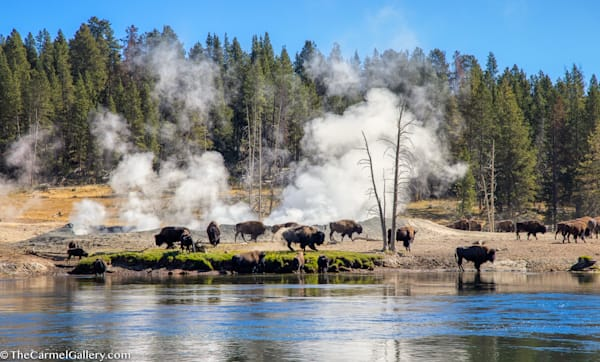 Yellowstone Morning Art | The Carmel Gallery