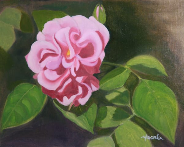 First Rose Of Spring Art   Pearl White Studio