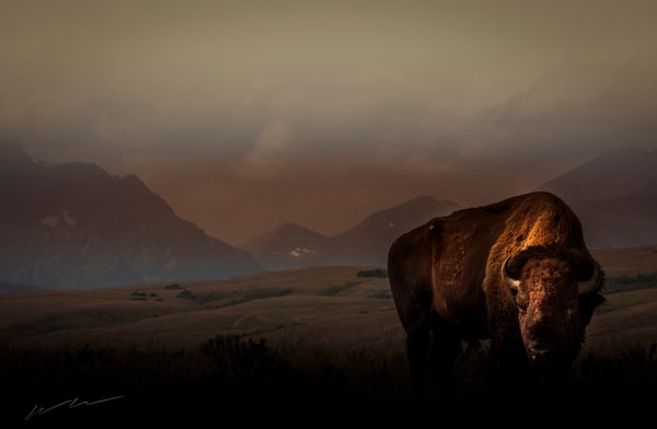 Buffalo Morning Photography Art | Harry John Kerker Photo Artist