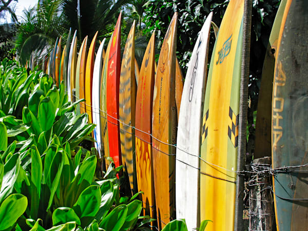 The Surfboard Fence | Aa019 Art | Pictures Plus