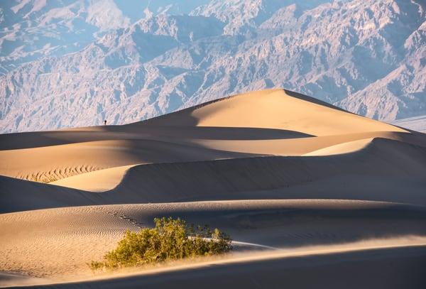 Dune Gazer