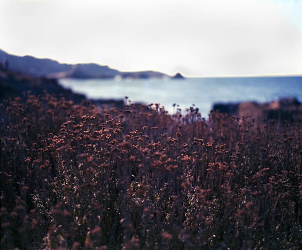 California Landscape Photography - Autumn Heather and Sea