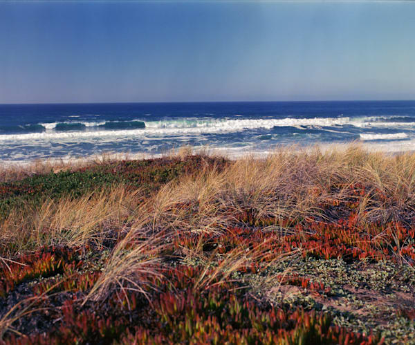 California Landscape Photography - Dunes at Point Reyes Beach