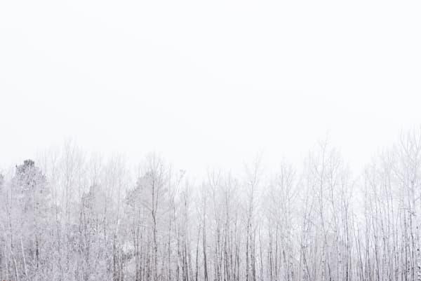 Frost Line I, by Jeremy Simonson