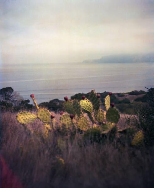 California Landscape Film Photography - Prickly Pear Cactus