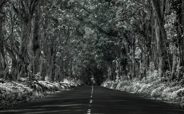 Infrared Tunnel Of Trees Photography Art | Ed Sancious - Stillness In Change