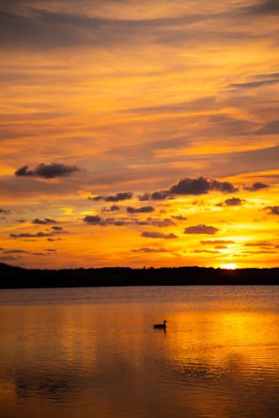 One Duck Sunset|Fine Art Photography by ToddBreitlingArt.com