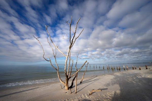 Florida scenes and wildlife