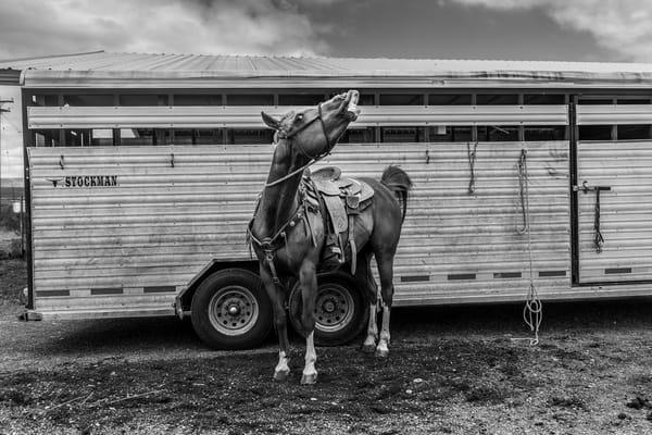 Whinny Photography Art | Harry John Kerker Photo Artist