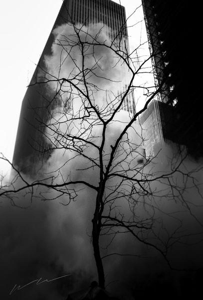 Portrait Of A Tree Photography Art | Harry John Kerker Photo Artist