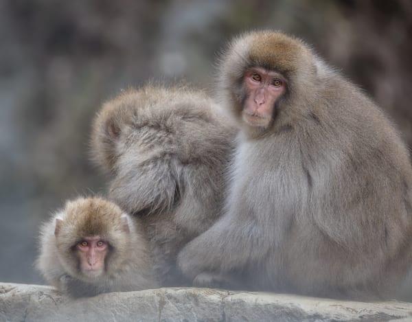 Monkey Business Photography Art | Charlotte Gibb Photography