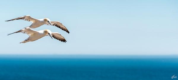 Synchronized Flight Art | TG Photo