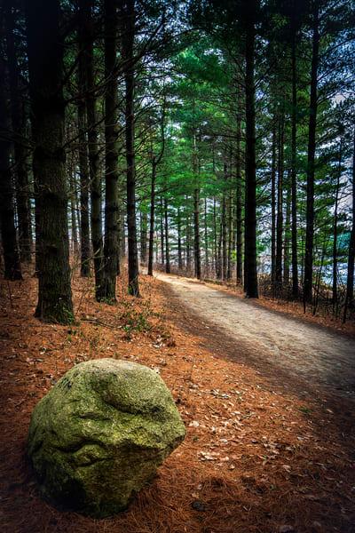 A Peaceful Walk Art | marcyephotography