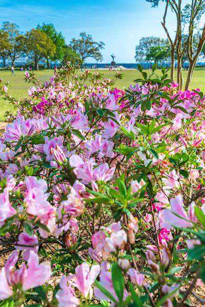 Flowers In Bloom Photography Art | kramkranphoto