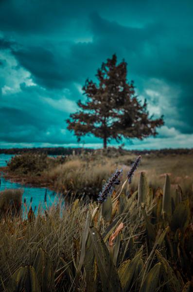 Spring Park Blues Photography Art | kramkranphoto