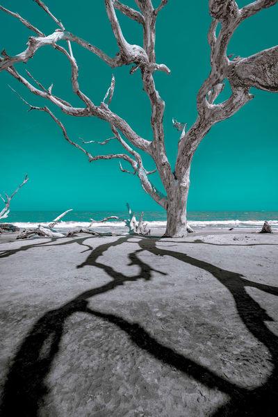 Jekyll Shadows Photography Art | kramkranphoto