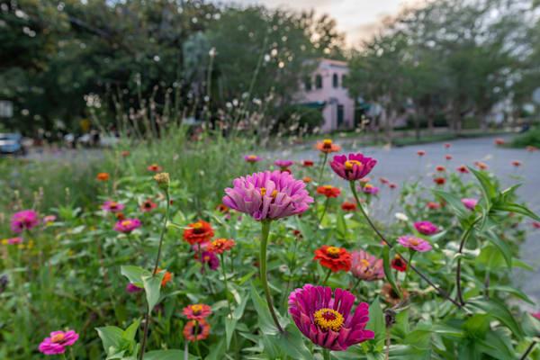 Avondale Flowers Photography Art | kramkranphoto