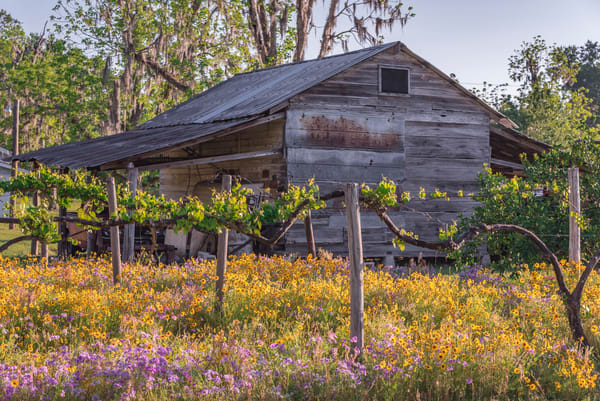 Farmhouse Flowers Delight Photography Art | kramkranphoto