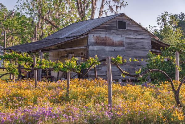 Farmhouse Flowers Delight Photography Art | kramkranphoto
