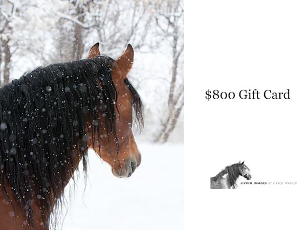 $800 Gift Card | Living Images by Carol Walker, LLC