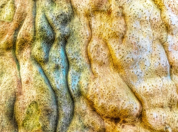 Tree Trunk Trails|Fine Art Photography by ToddBreitlingArt.com
