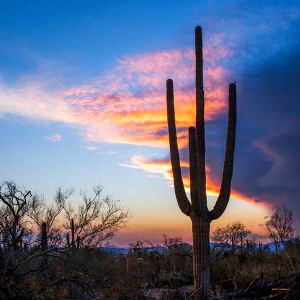 USA, Arizona, Tucson, Saguaro National Park West