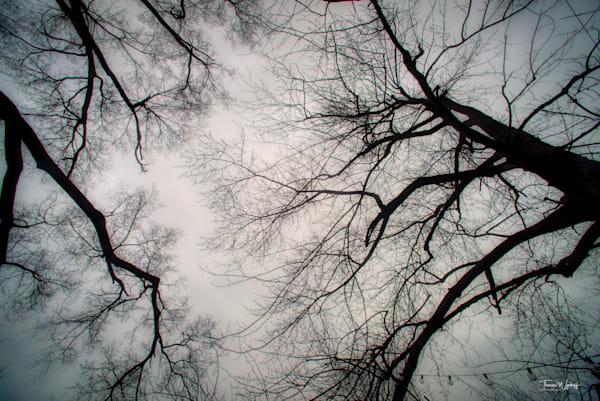 Winter Treetops, 2020. Photograph by Thomas Wyckoff