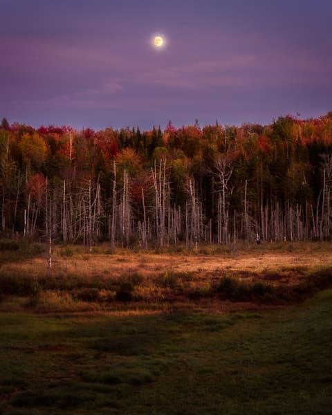 Hyde Park Moonrise