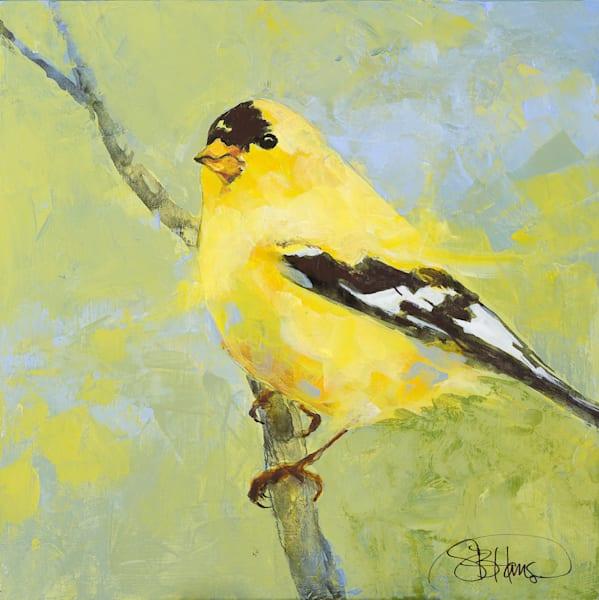 American Goldfinch 2, artwork by Sarah B Hansen