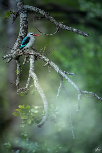 king fisher fine art photography