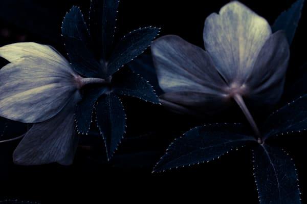 Blue Like Evening No. 1 Art | Anna Jaap Studio