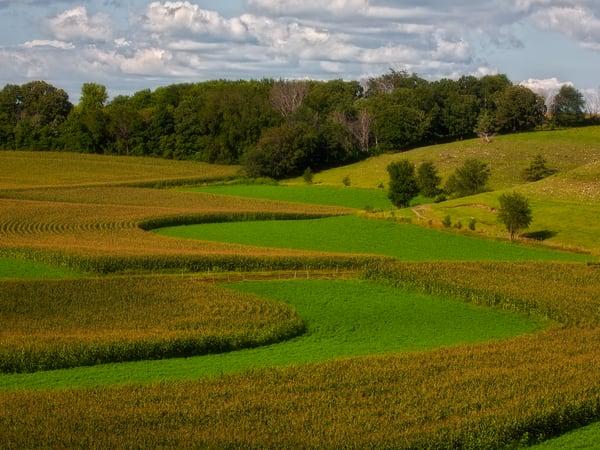 rolling cornfields Southern Minnesota