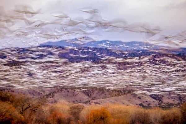 Ascendant Photography Art | Carol Brooks Parker Fine Art Photography