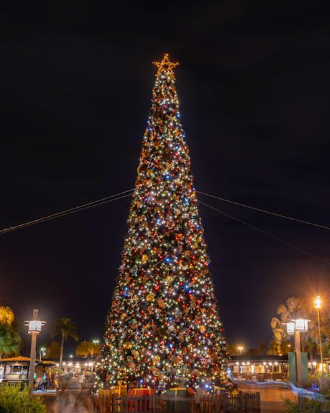 Animal Kingdom Christmas Tree Photography Art | William Drew Photography