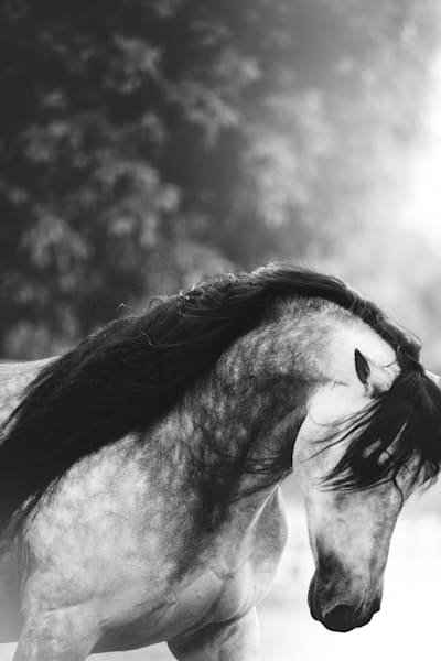 Motion Photography Art | Sydney Croasmun Photography