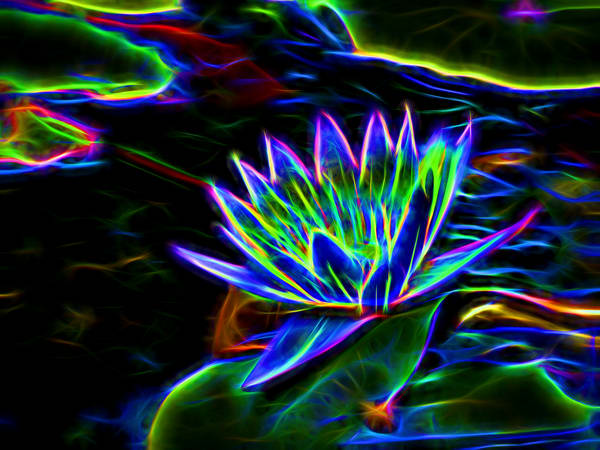 Electric Water Lillies Photography Art | frednewmanphotography