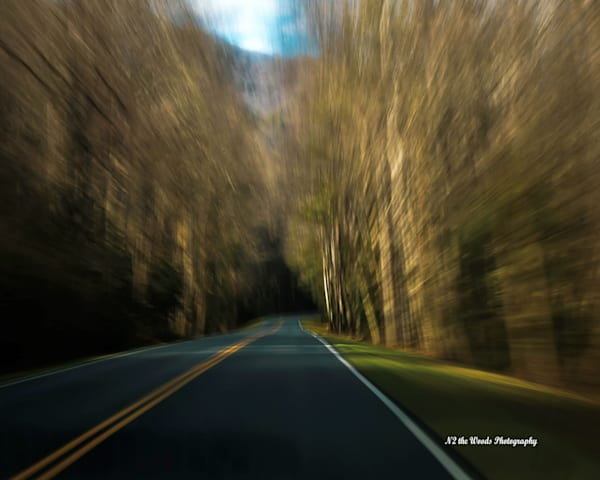 World Passing By Photography Art | N2 the Woods Photography - Nature and Wildlife Artwork