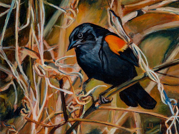 Fine art prints of The Guard. Red-winged Blackbird, original painting by Janet Jardine