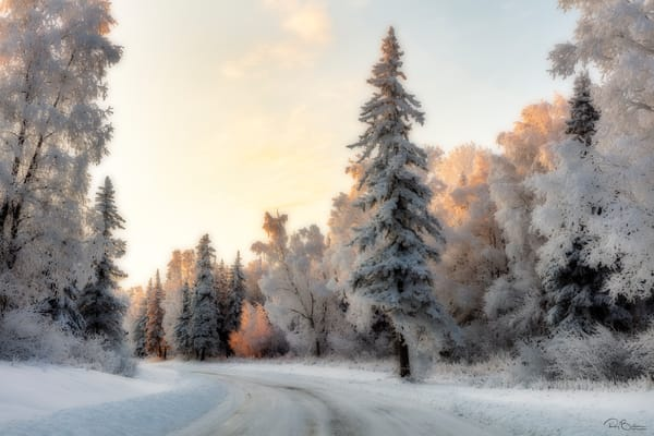 Hoarfrost covered  trees Alaska
