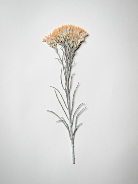 Pressed Flowers Inside Moleskine Journal | Nathan Larson Photography