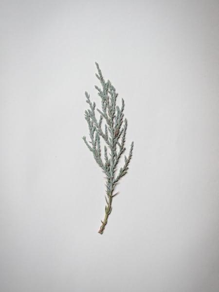 Pressed IX - Moleskine Journal - Fine Art Photos of Pressed Flowers