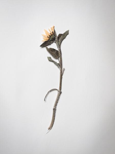 Pressed VIII-Pressed Flowers | Moleskine Journal | Nathan Larson
