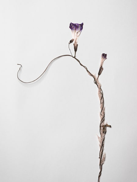 Pressed Flowers and Nature Stilllifes | Nathan Larson Photography