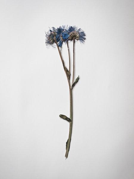 Nathan Larson Photography | Fine Art Pressed Flowers | Still-life