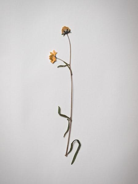 Pressed Flowers | Stilllife | Nathan Larson | Fine Art