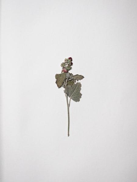 Pressed Flowers | Stilllife | Nathan Larson Photography | Fine Art