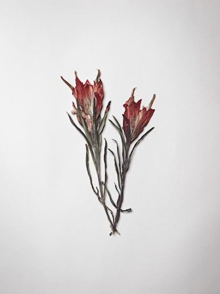 Moleskine Journal Full of Pressed Flowers | Nathan Larson Photography.